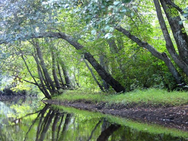 batsto_river